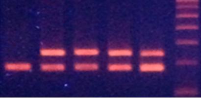 Chế tạo hạt Fe3O4 tách chiết DNA