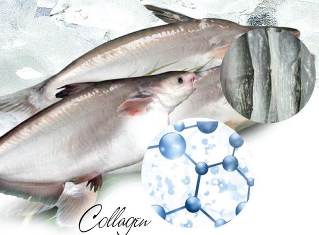 Tách chiết và tinh chế collagen từda cá tra